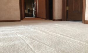 Carpet Cleaners Elmhurst – Windy City Steam Carpet Cleaning