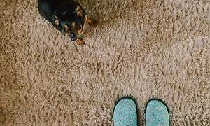 Northridge CA Carpet Cleaning and Eco-Friendly Wood Floor Cleaning Services